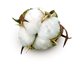 Cotton Quality