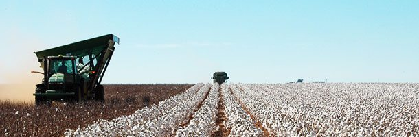 Cotton-Harvest-Systems