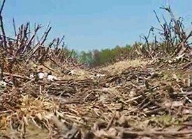 Preserving Soil