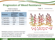 Slide10.PNG lesson5 180x130 - Herbicide-resistant Weeds Training Lessons