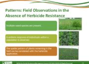 Slide12.PNG lesson4 180x130 - Herbicide-resistant Weeds Training Lessons