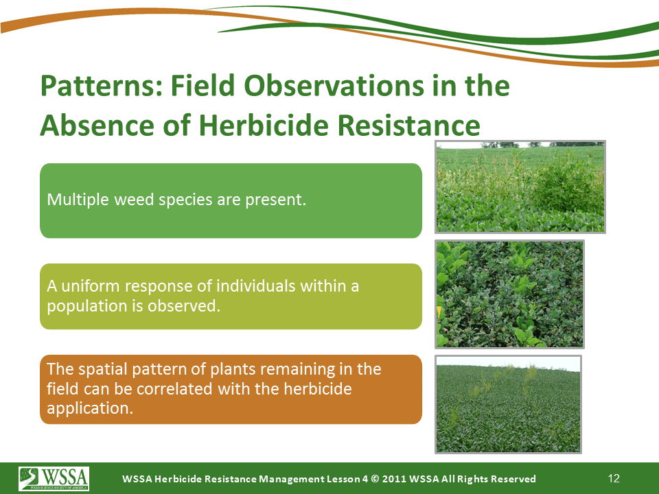 Slide12.PNG lesson4 - Scouting After a Herbicide Application and Confirming Herbicide Resistance