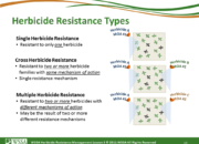 Slide13.PNG lesson3 180x130 - Herbicide-resistant Weeds Training Lessons