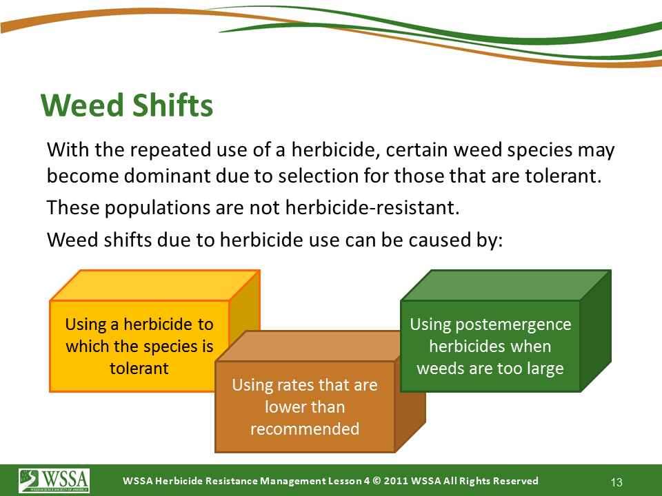 Slide13.PNG lesson4 - Scouting After a Herbicide Application and Confirming Herbicide Resistance