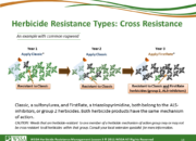 Slide14.PNG lesson3 180x130 - Herbicide-resistant Weeds Training Lessons