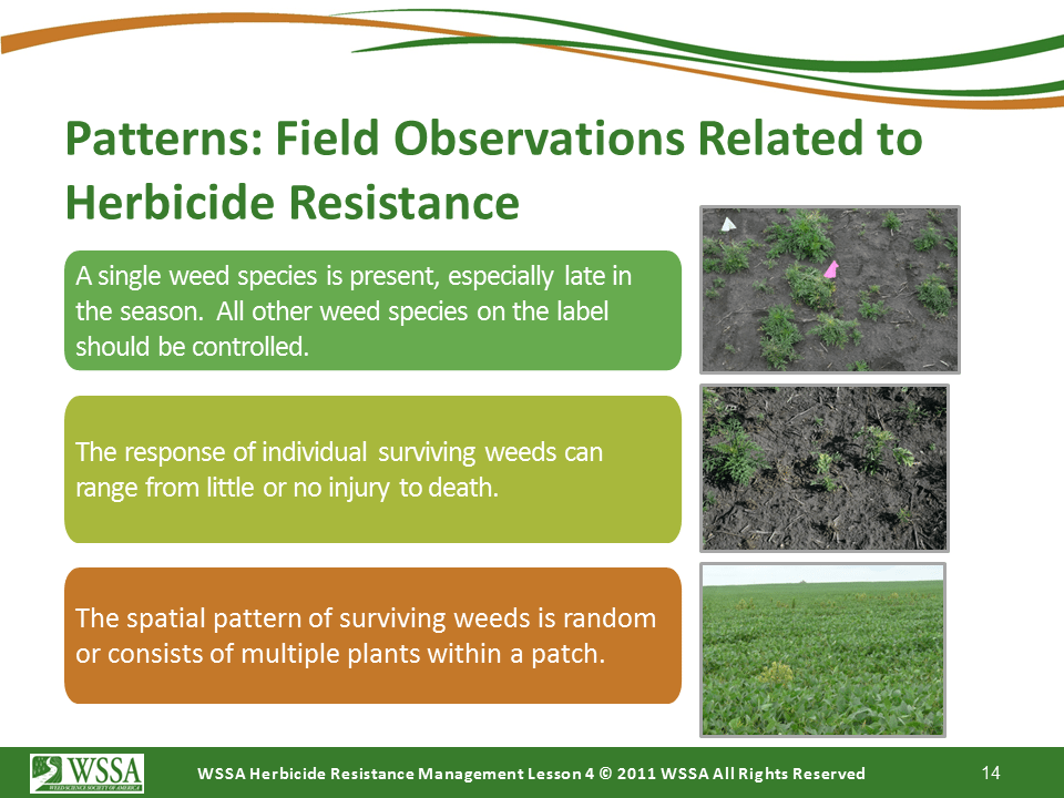 Slide14.PNG lesson4 - Scouting After a Herbicide Application and Confirming Herbicide Resistance