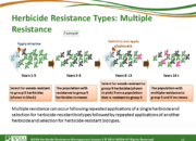 Slide15.PNG lesson3 180x130 - Herbicide-resistant Weeds Training Lessons