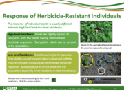 Slide15.PNG lesson4 180x130 - Herbicide-resistant Weeds Training Lessons