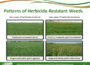 Slide16.PNG lesson4 180x130 - Herbicide-resistant Weeds Training Lessons