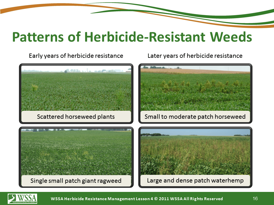 Slide16.PNG lesson4 - Scouting After a Herbicide Application and Confirming Herbicide Resistance