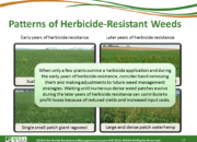 Slide17.PNG lesson4 180x130 - Herbicide-resistant Weeds Training Lessons