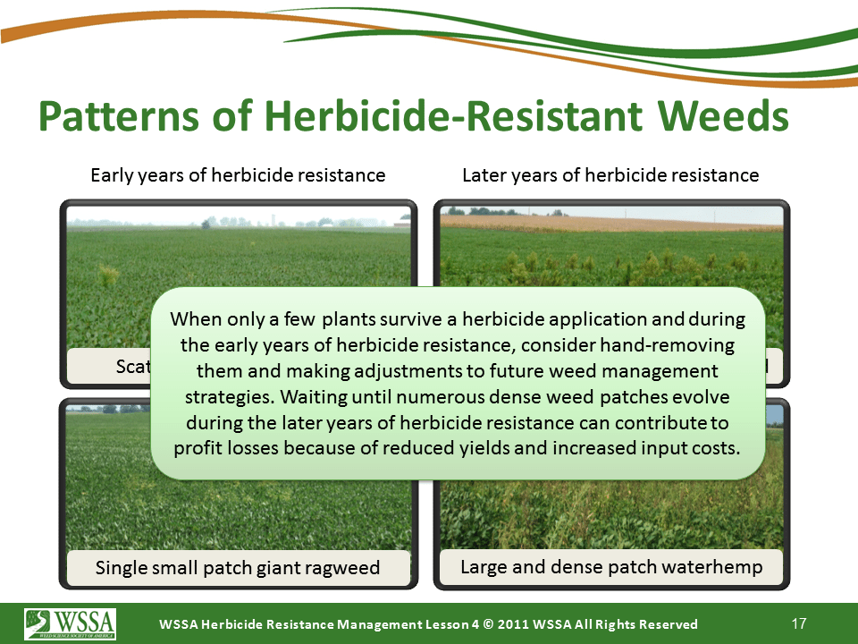 Slide17.PNG lesson4 - Scouting After a Herbicide Application and Confirming Herbicide Resistance