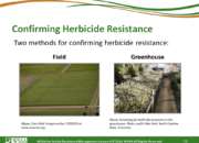 Slide19.PNG lesson4 180x130 - Herbicide-resistant Weeds Training Lessons