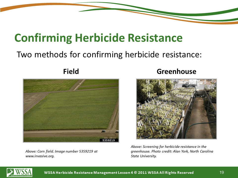 Slide19.PNG lesson4 - Scouting After a Herbicide Application and Confirming Herbicide Resistance