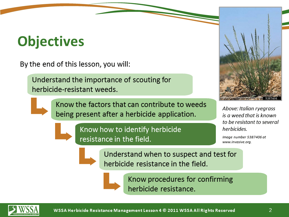 Slide2.PNG lesson4 - Scouting After a Herbicide Application and Confirming Herbicide Resistance