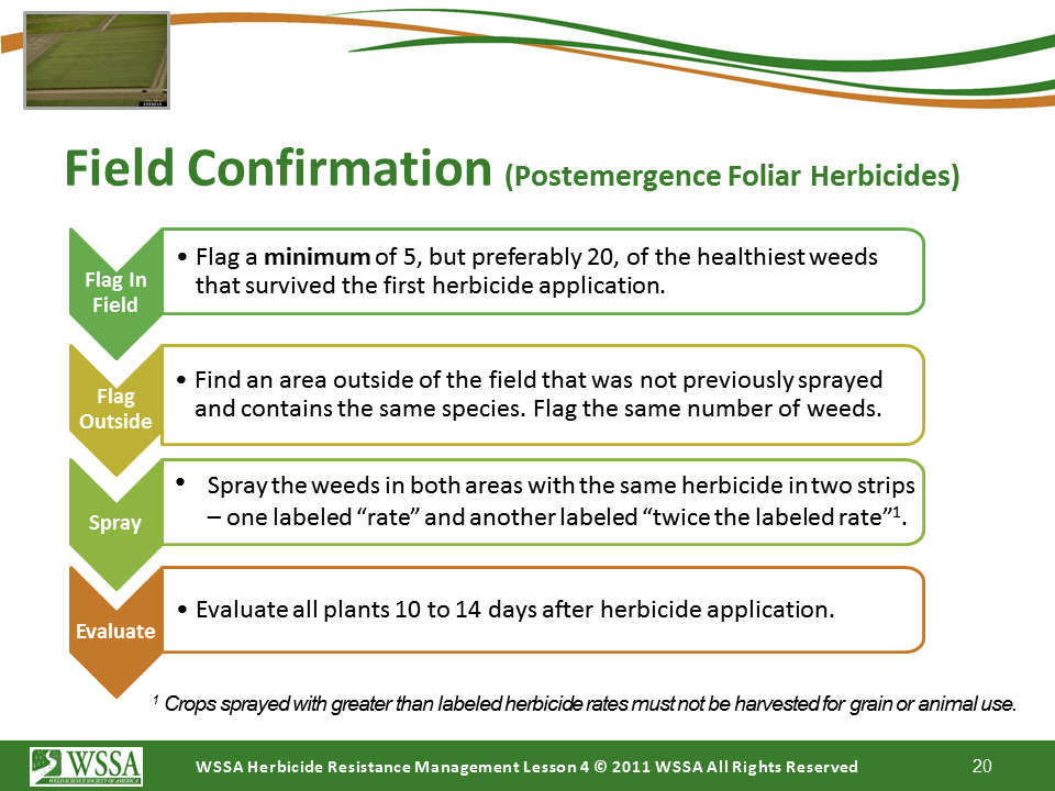 Slide20.PNG lesson4 - Scouting After a Herbicide Application and Confirming Herbicide Resistance