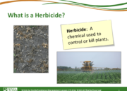 Slide3.PNG lesson2 180x130 - Herbicide-resistant Weeds Training Lessons