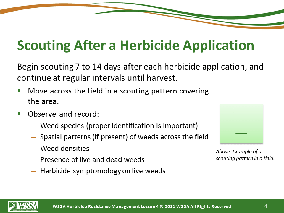 Slide4.PNG lesson4 - Scouting After a Herbicide Application and Confirming Herbicide Resistance