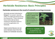 Slide5.PNG lesson3 180x130 - Herbicide-resistant Weeds Training Lessons