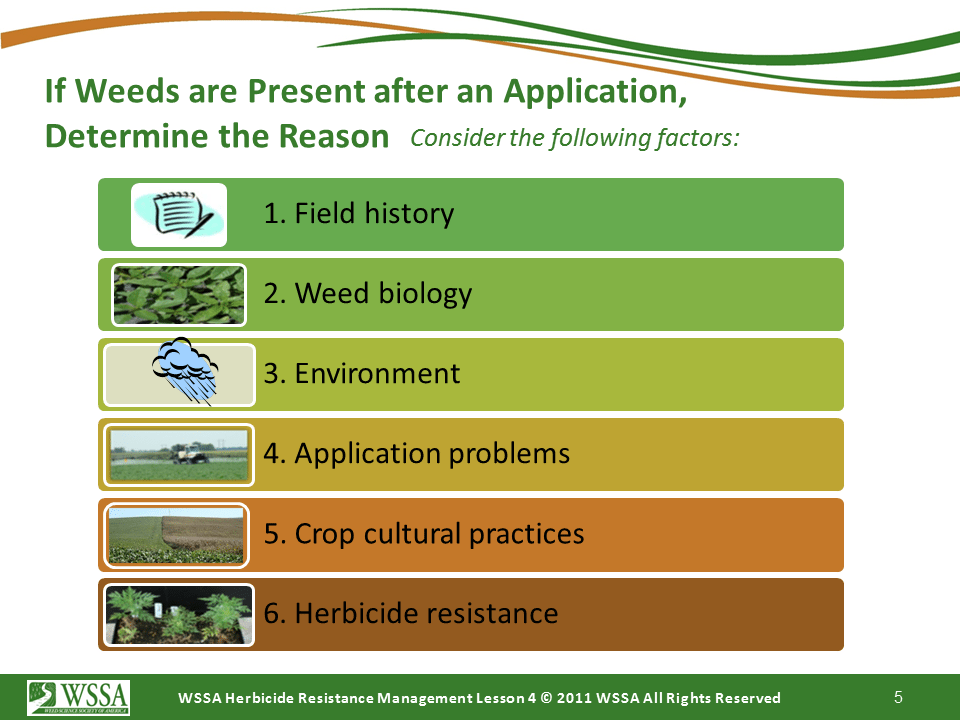 Slide5.PNG lesson4 - Scouting After a Herbicide Application and Confirming Herbicide Resistance