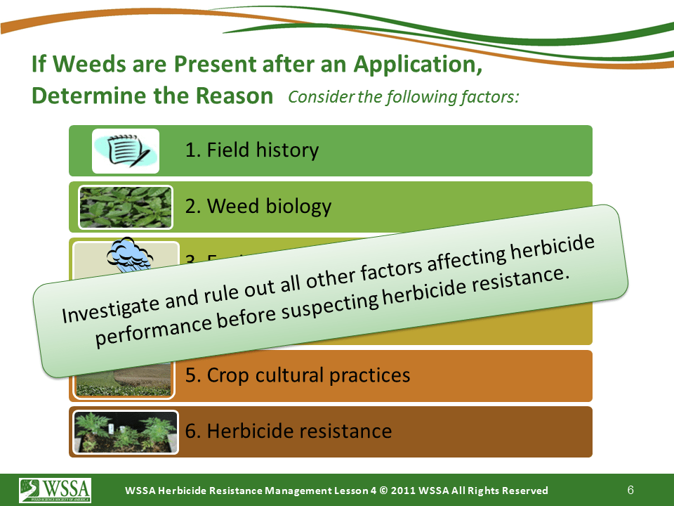 Slide6.PNG lesson4 - Scouting After a Herbicide Application and Confirming Herbicide Resistance