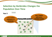 Slide7.PNG lesson3 180x130 - Herbicide-resistant Weeds Training Lessons