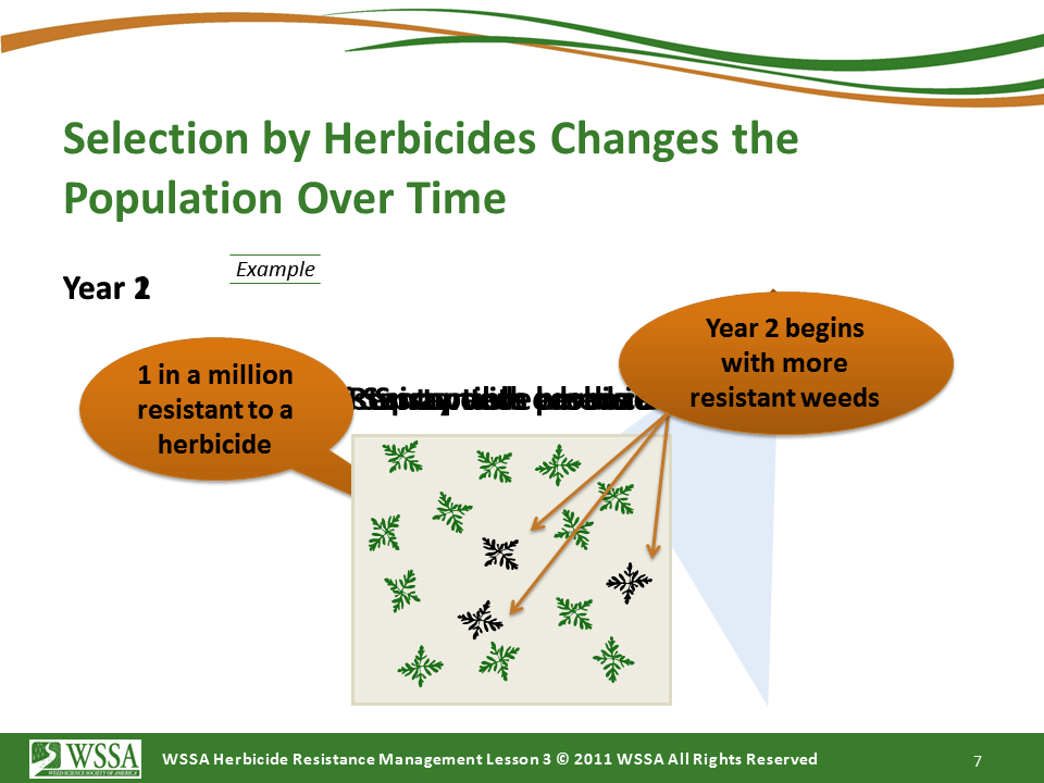 Slide7.PNG lesson3 - What Is Herbicide Resistance?