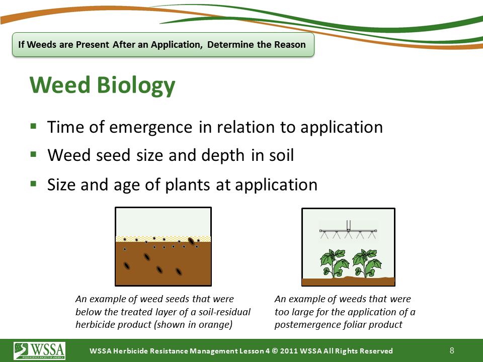 Slide8.PNG lesson4 - Scouting After a Herbicide Application and Confirming Herbicide Resistance