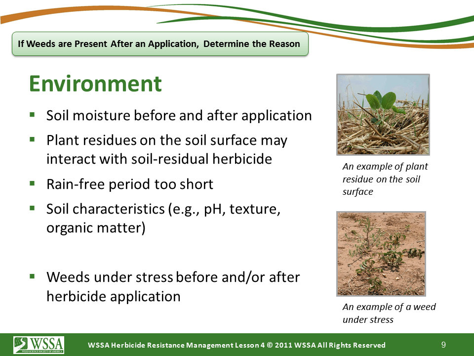 Slide9.PNG lesson4 - Scouting After a Herbicide Application and Confirming Herbicide Resistance