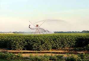 irrigate cotton 3 - Why Irrigate Cotton?