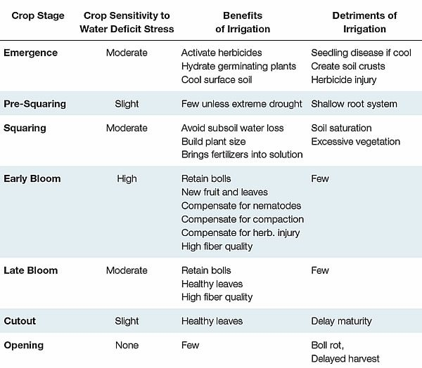 irrigate management 1 - Management Considerations for Irrigated Cotton