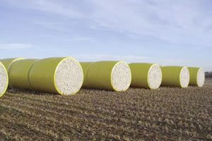 Figure 5 Deere round modules stored for transportation to the gin. Note the yellow plastic wrap forms a lip on the ends of the modules.