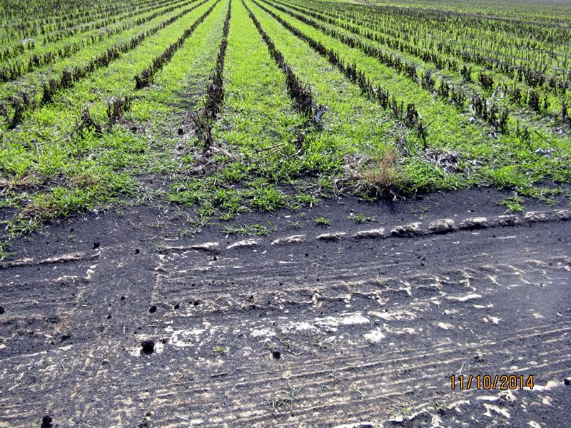 Alternative and Low-Cost Sources of Lime and Fertilizer - Cotton