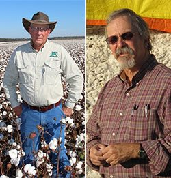 Ron Rayner - Year-Round Expert Advice to Cotton Growers