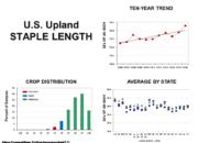 Slide5 180x130 - Cotton Crop Quality Summary