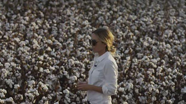 cotton damsel