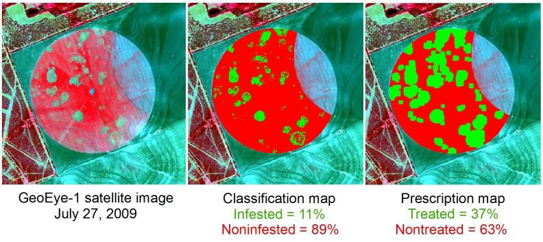 Site Specific Management of Cotton Root Rot Yang 6 - Site-Specific Management of Cotton Root Rot Using Airborne and Satellite Imagery and Variable Rate Technology