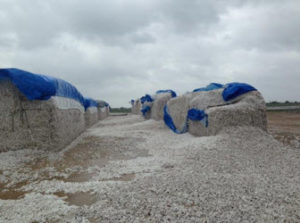 hurricanes devestated cotton 300x223 - Cottonseed Supply Stable Despite Hurricane Events