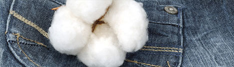cottontoday byproducts - Cotton Today