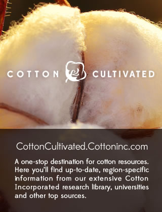 Cotton Cultivated