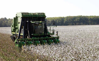 Responsible Cotton Production