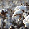 Nonwovens Cotton Fiber Suppliers