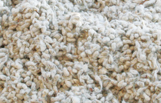 About Whole Cottonseed