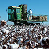 harvest tool thumb - Cotton Farming Decision Aids