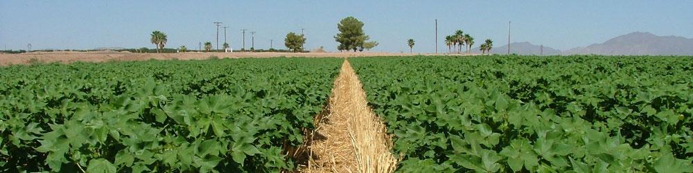 agronomy main - Agronomy