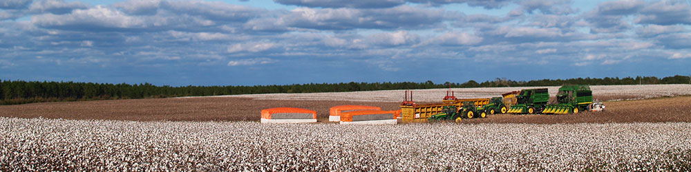 crop quality main - Cotton Crop Quality