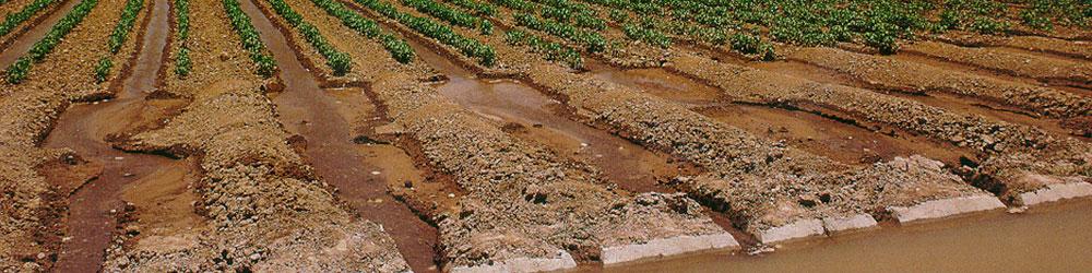 irrigation main - Irrigation Management